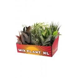 M-12 mixplant showdoos