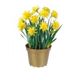 Narcis Rip van Winkle 12cm
