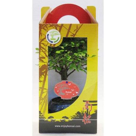 bonsai mix 13 cm broom + plate in giftbox, valentine/mothersday