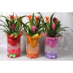 Arrangementen Bromelia Planten in glas