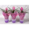 Arrangementen TillandsiaTillandsia in windlicht glas