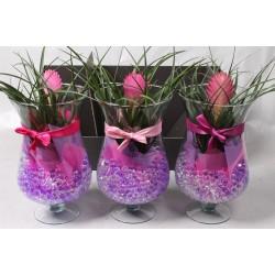 Arrangementen TillandsiaPlant in glas