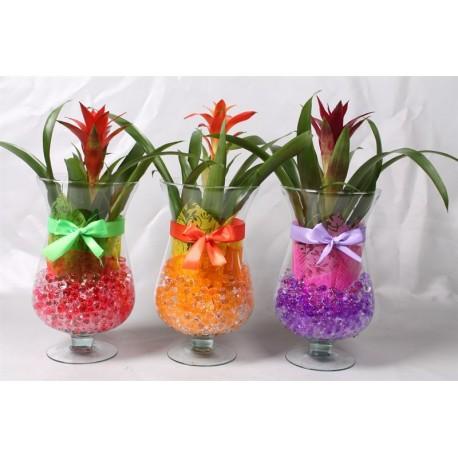 Arrangementen Guzmania Plant in glas