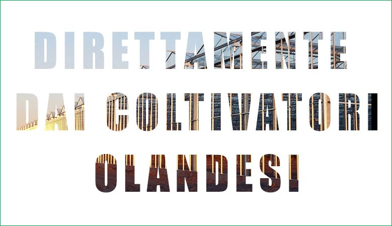 Direttamente dai Coltivatori Olandesi
